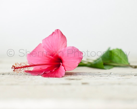 Flower Photography - Pink Hibiscus Photo - Tropical Flower Photography - Nature Photo - 8x10 8x8 10x10 11x14 12x12 20x20 16x20 - Photography