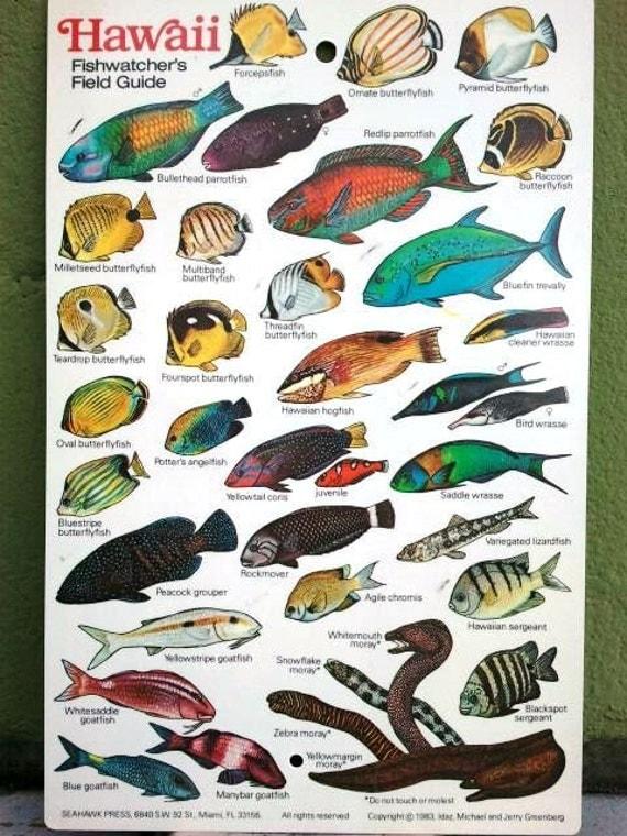 1983 Hawaiian Fish Chart