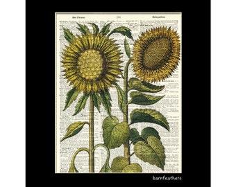 Vintage Dictionary Art Print - Sunflower - Gardening - Dictionary Page - Book Art Print  - Home Decor No. P149