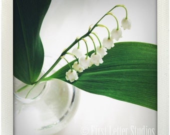 Lily of the Valley 5x5 Photograph