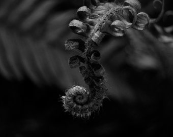 Baby Fern - photographic print on lustre paper