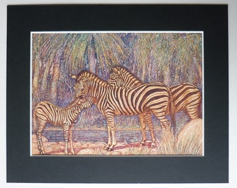 Burchell's Zebras by  Louis A Sargent - Antique print -  Asian -  Africa - Plains - Botswana - Ethiopian - tribal - print