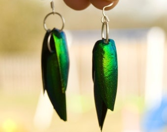 FREE SHIPPING  Elytra Beetle Wing Earrings