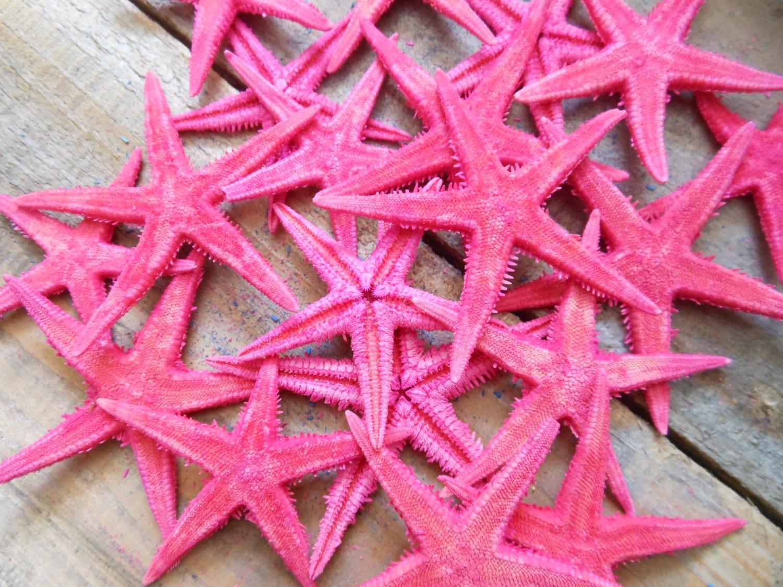 Pink Starfish Dyed Starfish Small Colorful Starfish