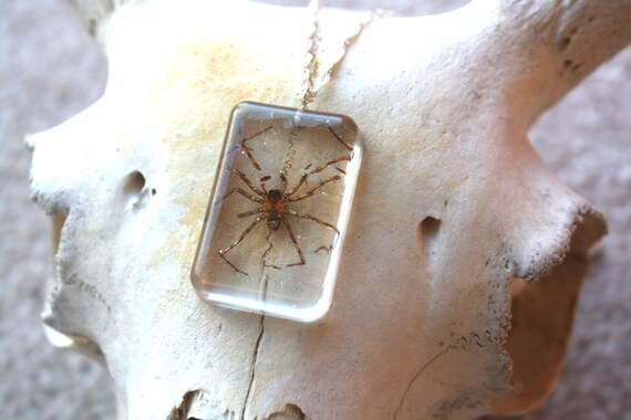 Real spider necklace