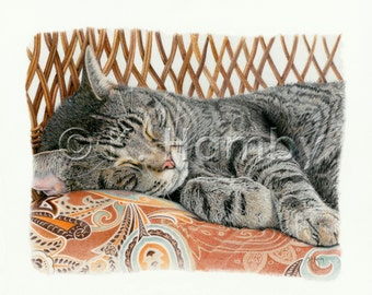 Sleeping Cat Print of an Original Colored Pencil Drawing