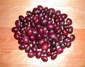 True Red Cranberry Heirloom Pole Bean, Organic seeds