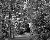 "Fine Art Print ""The Path"", Black and White"