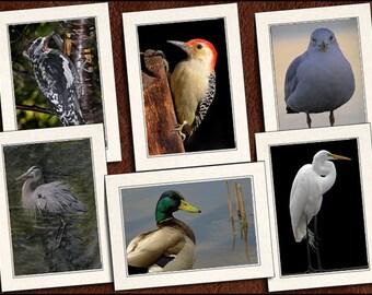 6 Bird Photo Note Cards Handmade - Bird Note Card - 5x7 Bird Cards - Greeting Card Set - Bird Greeting Cards Handmade (GP61)