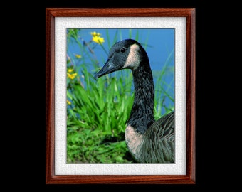 Canada Goose Print - 8x10 or 11x14 Canada Goose Photograph - Bird Photograph - Bird Print - Canada Goose Art (P17)