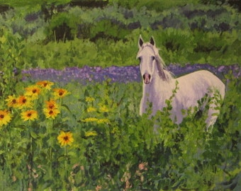 White horse in a field of Sunflowers