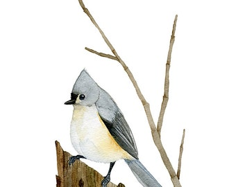 Watercolor Painting Bird Art Tufted Titmouse Archival Print 5x7