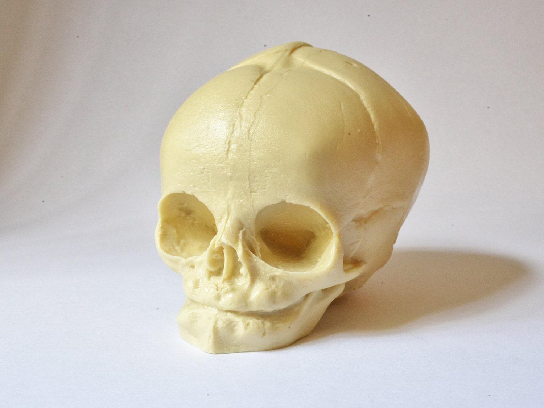 Skull Real Size Resin Fetus Skull Natural Bone Color Goth