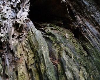 Tree Cavern-Color Print