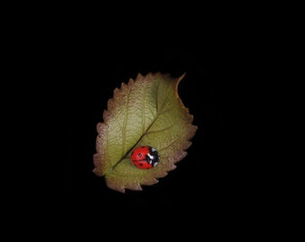 Bramble Leaf and Ladybird Pin Brooch