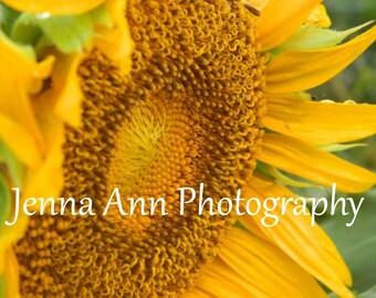 Sunflower - digital photograph