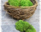 Spring Green Reindeer Moss (3 cups) - Bulk Terrarium Supplies - Forest, Woodland, Preserved, Wreath Making, Flower Arranging, Nature Craft