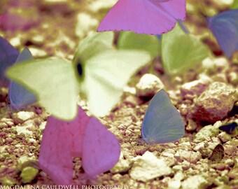 Butterflies, Belize - Nature Wall Art