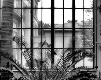 Window Gaze