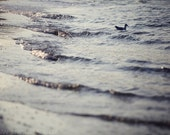 "Beach Photography, Netherlands, Fine Art Photo Print, 8x12, ""Early Swim"", Sea Gull, Sea, blue, swimming, waves, Travel, Landscape, Nature"