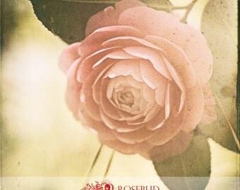 Camellia 8x8