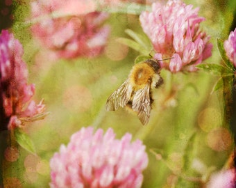 Bee, Clover, Meadow, Nature photography, Wall Decor.