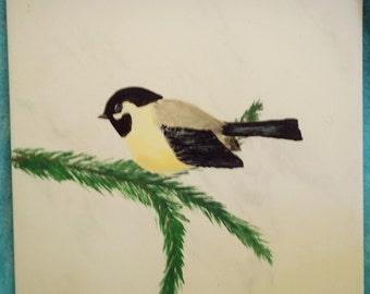 Chickadee on Evergreen Bough 3