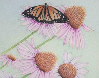 Pencil Art Work Orange Butterfly Rests On Purple Cone Flowers Original Drawing-Print