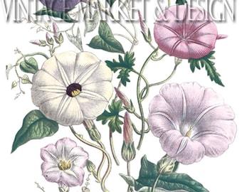Vintage Botanical   No. LG-3371