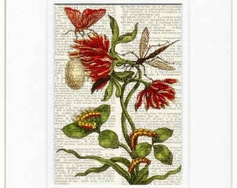 1600's botanical I print