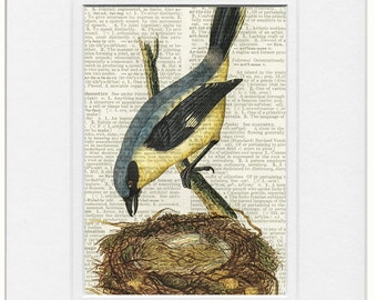 bird IX dictionary page print
