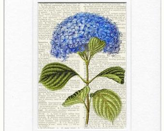 hydrangea flower print