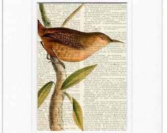 Bird, House Wren print