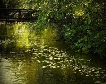 creek trees leaf green bridge landscape photography nature fine art photography home decor office decor branches