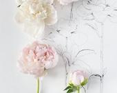 flora_no_8