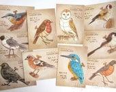 Clockwork Birds - set of 10 Postcard Prints, steampunk illustrations