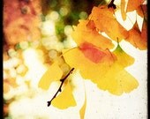 Colorful Ginkgo - Fine Art Print - Nature Photography - Yellow White TTV - For Tree Lovers - Etsy Wall Art