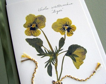 Golden yellow Tiger Viola flowers with braided tie, pressed Violas, greeting card, no.1126