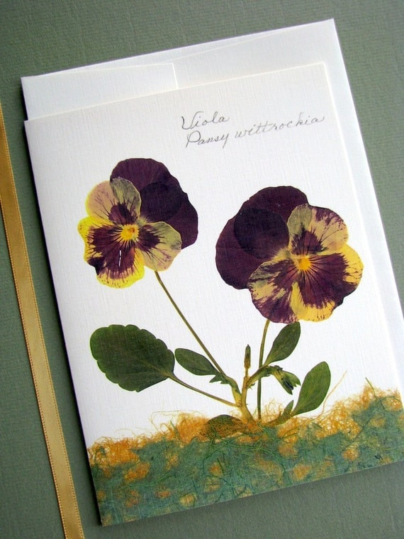 Maroon and gold Pansy flowers, pressed flower cards, garden pansies, greeting card no.1086