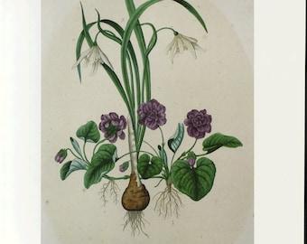 Sweet Violets Print by Prestele Book Plate SALE buy 3, get 1 FREE or Buy 5, get 2 FREE