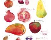Fall fruit illustration, Kitchen art poster, Seasonal fruits, 8X10 art print, Kitchen decor, Watercolor food, Botanical print, Food painting