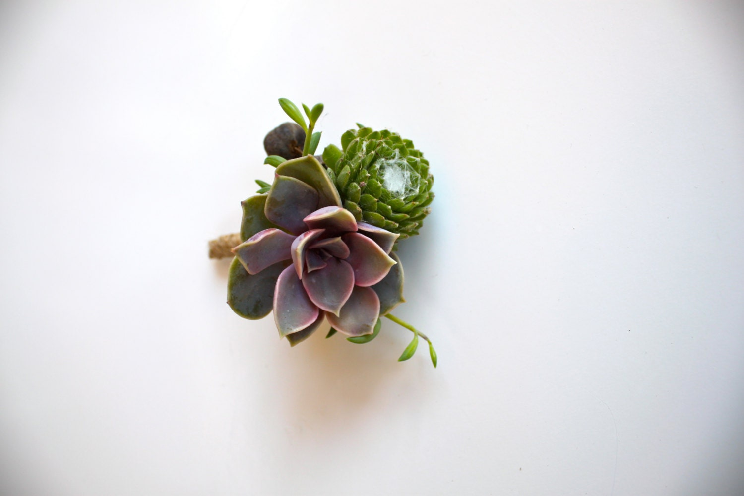 Purple Pink Succulent Boutonniere With Tallow Berry