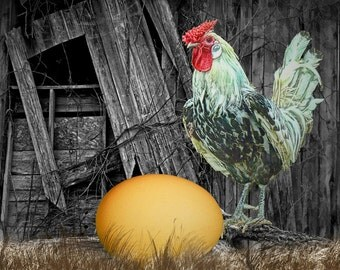 Which came First the Chicken or the Egg A Fine Art Wall Decor Photograph
