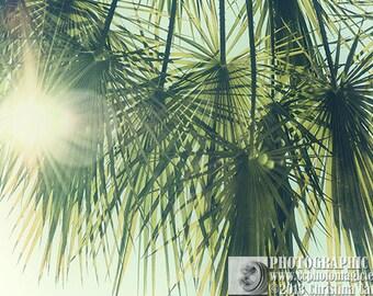 PALM TREE 1 - digital high res jpg - fine art nature photography - beachy faded aqua turquoise seafoam green palmtree leaves