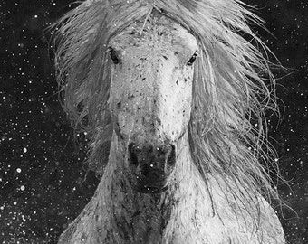 Splash - Fine Art Horse Photograph - Horse - Camargue -  Black and White