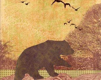 Migration Bear