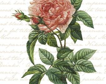 Antique Pink Rose Download File Art Print