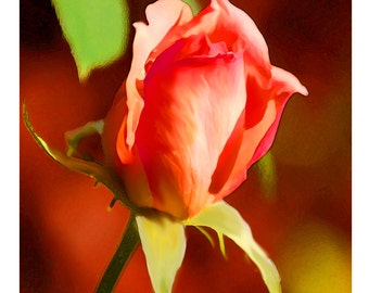 Beautiful Coral Rose Bud Bloom Card Set