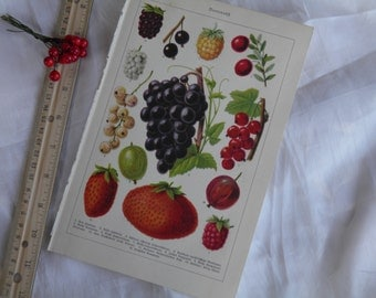 Berries -  German Text Lithograph