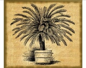 Palm tree Instant clip art Digital download image for iron on fabric transfer burlap decoupage cards pillows totes Item No. gt980